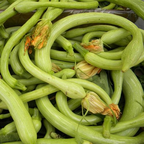 Zucchine trombetta