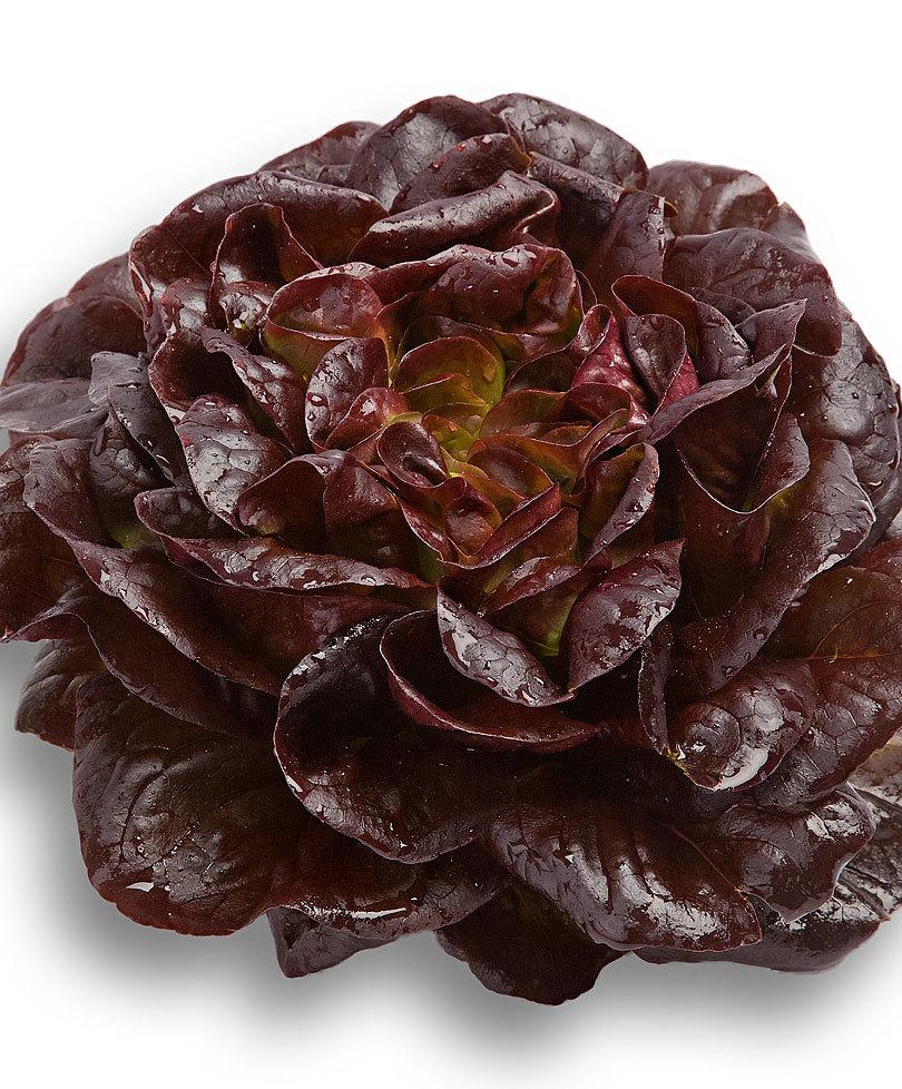 Insalata salanova rossa