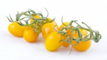pomodori gialli