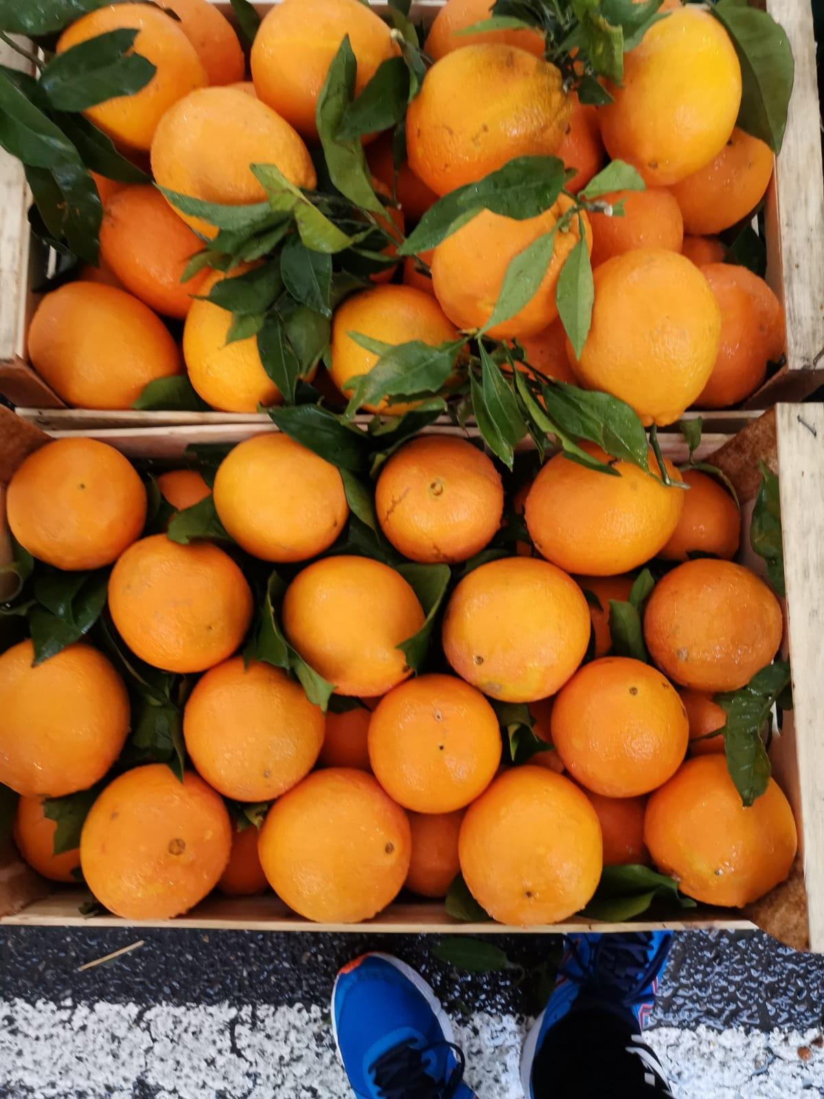 arance non trattate navel