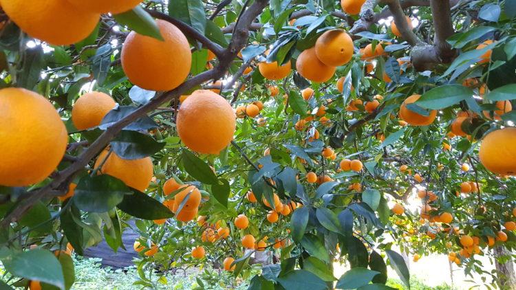 arance naturali vaniglia