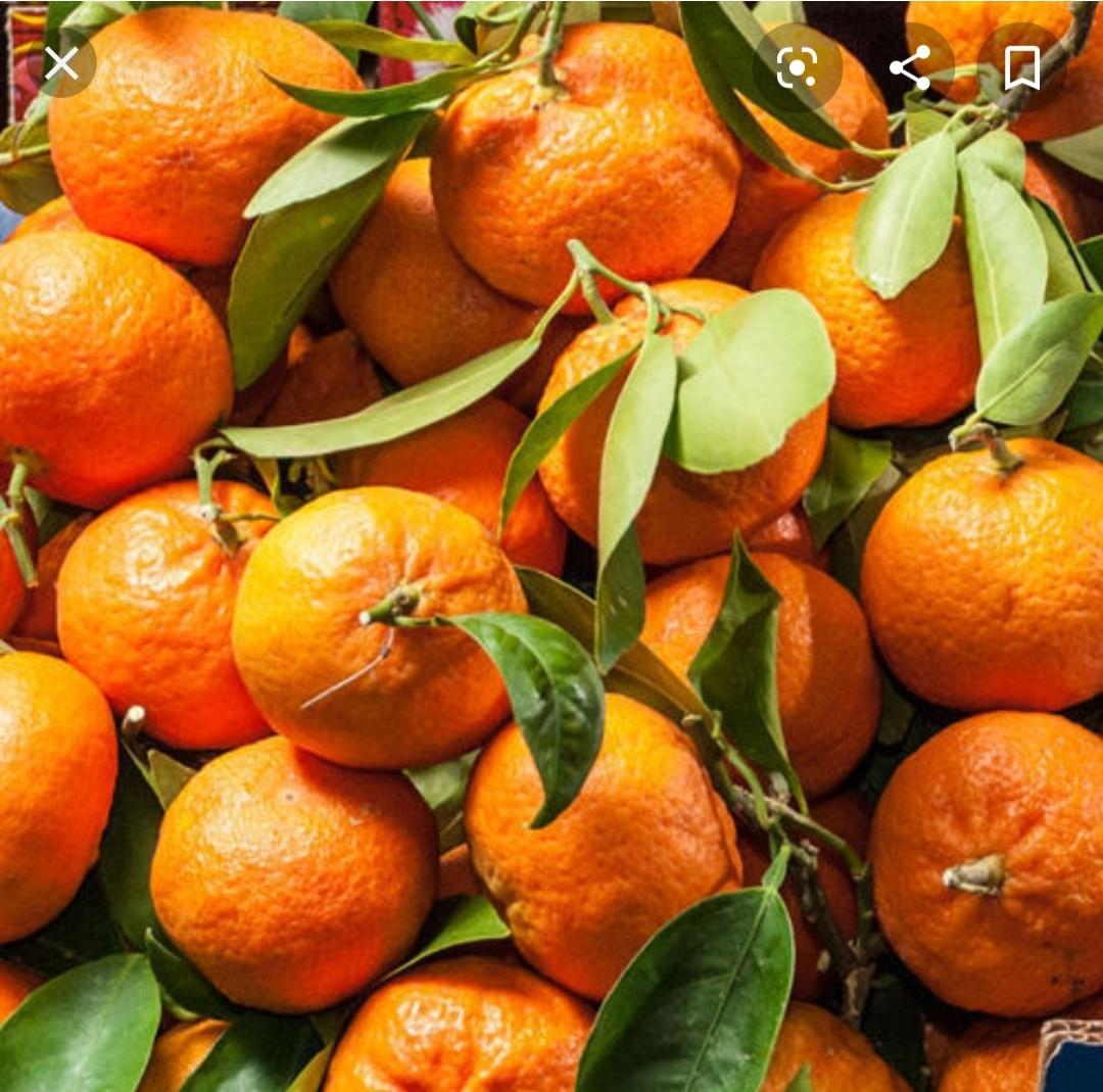"""Mandarini tardivi Sicilia  """"PROMOZIONE """""""