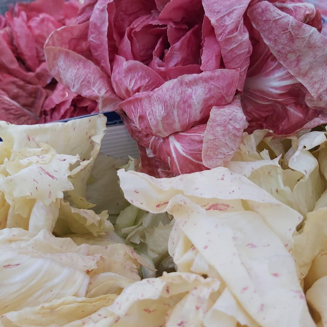 insalate variegata e rosa di simone di castelfranco