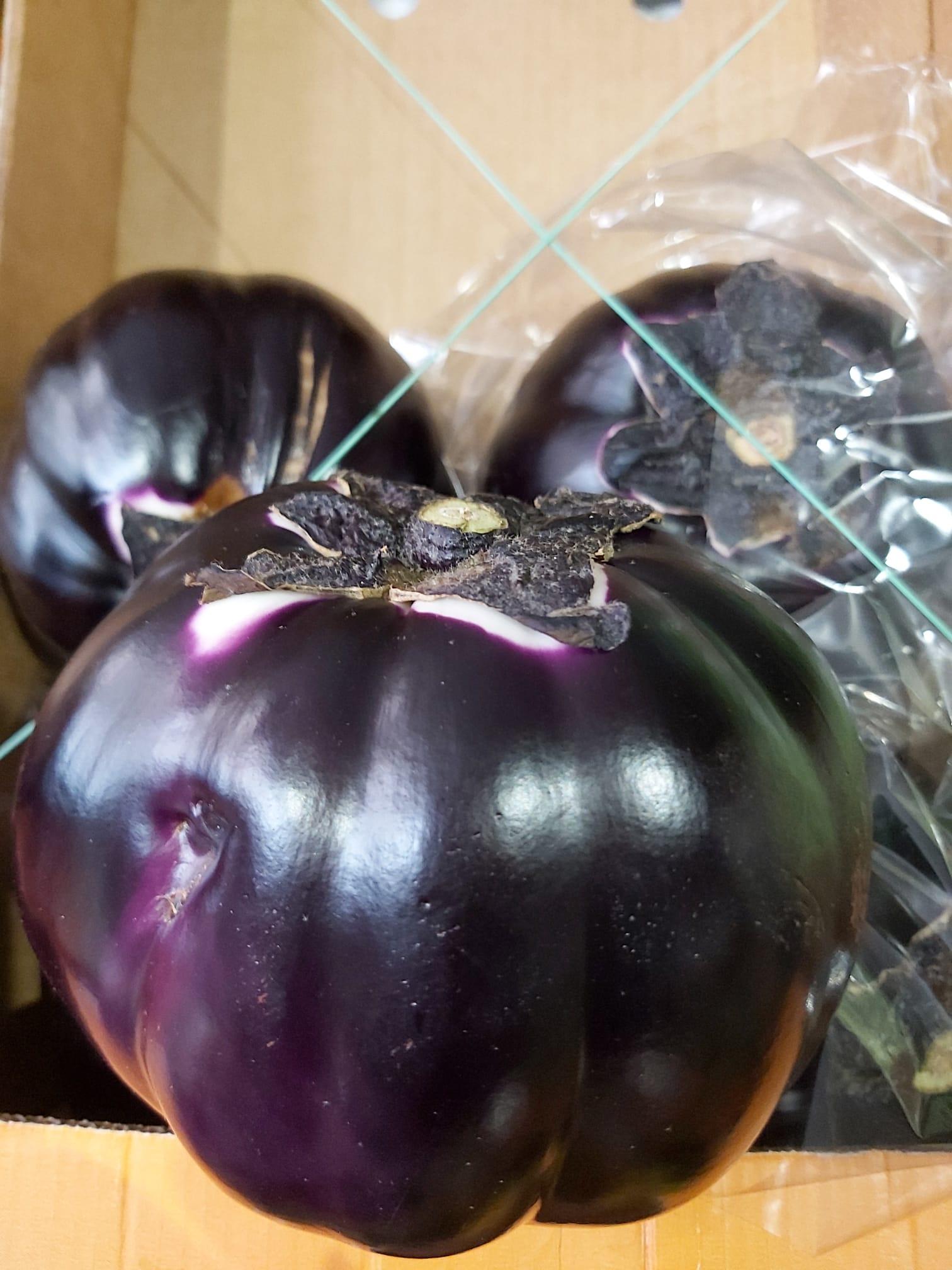 melanzane tonde di sicilia senza semi