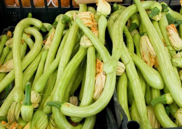 zucchina trombetta